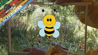 2 of 10 - Basi di apicoltura con Fernando - La dimora delle api - Come è fatta una arnia?