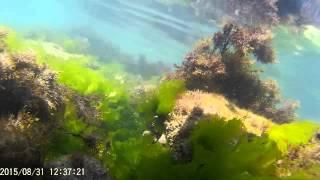 Подводния свят на Плаж Кибела - Каварна