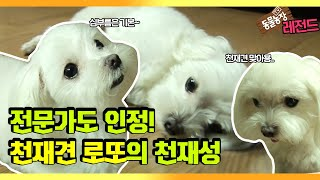 From errands to yabawi~ 'Genius Dog Lotto' full version replay I TV Animal Farm