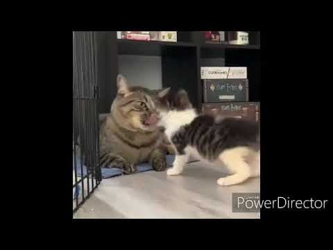 CUTE AND FUNNY CAT VIDEOS TO START YOUR 2020! SD 360p