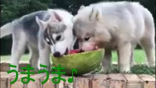「おもしろペットちゃんねる」の登録よろしくお願いします! ➡http://ur...