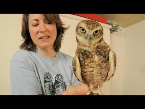Saskatchewan's endangered owls