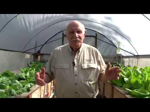 Aquaponics on Solar? Is it Possible?