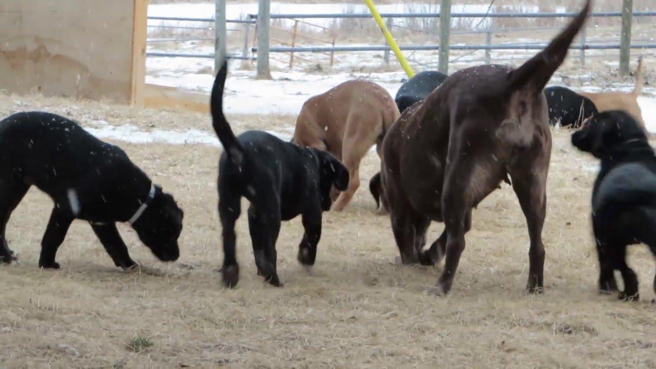 Mastador Puppies Playtime Youtube