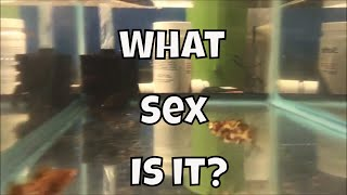 How to sex Mollies Chocolate Molly Update Fry Fry Fryday Aquarium Fish Room VLOG
