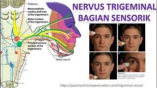 VVP series #9 : Surgical Management Of Trigeminal Neuralgia.