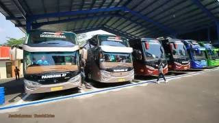 perang telolet semua bus premium class pandawa87