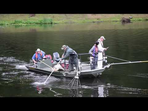Lake Fairfax Fish Survey