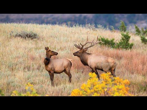 Elk Study Update - NDGNF - 07-28-2020