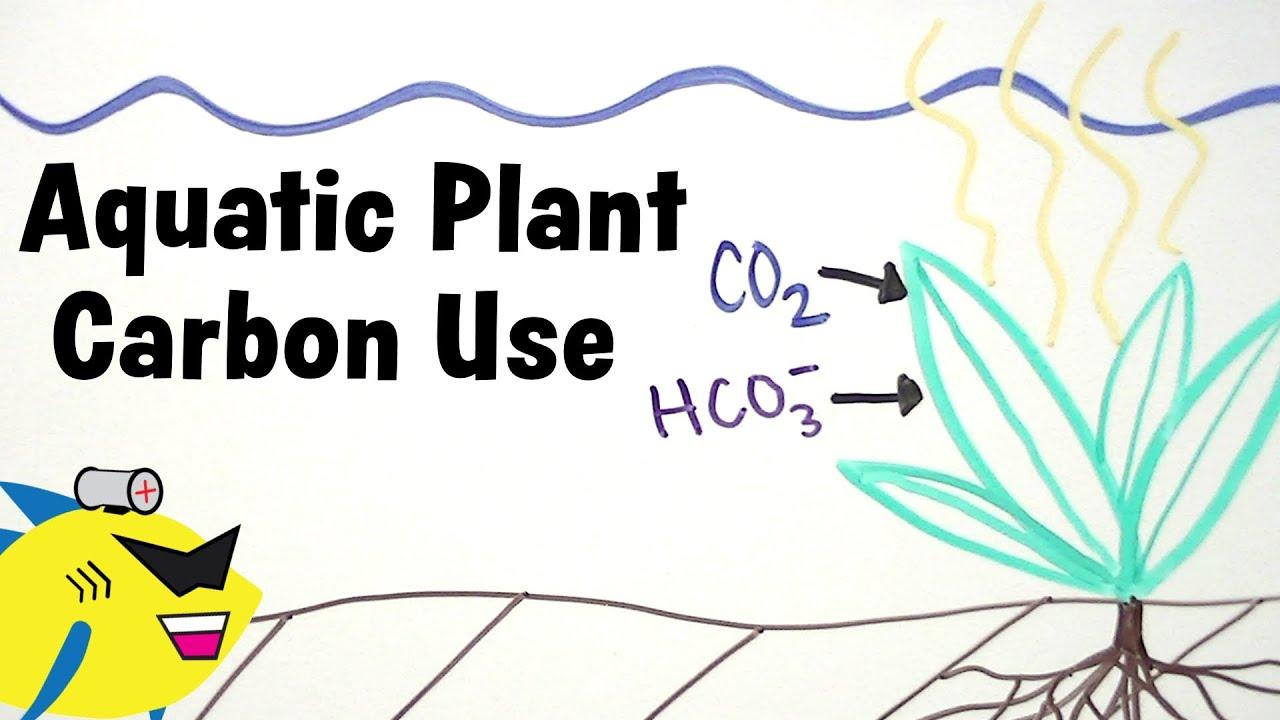 Aquarium Plants and Carbon CO2 HCO3 Utilization