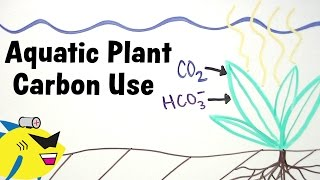 Aquarium Plants And Carbon (co2 / Hco3-) Utilization