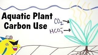 Aquarium Plants And Carbon (co2 / Hco3-) Utilization