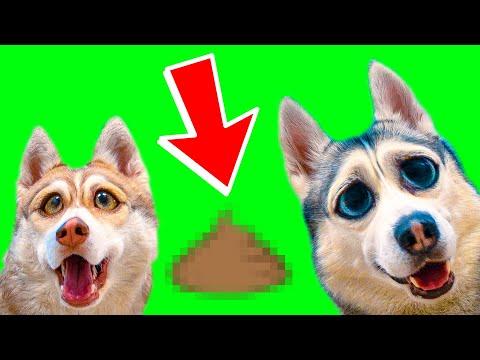 ШОК! НАШЛИ ЭТО В ЛЕСУ!! (Хаски Бублик) Говорящая собака Mister Booble