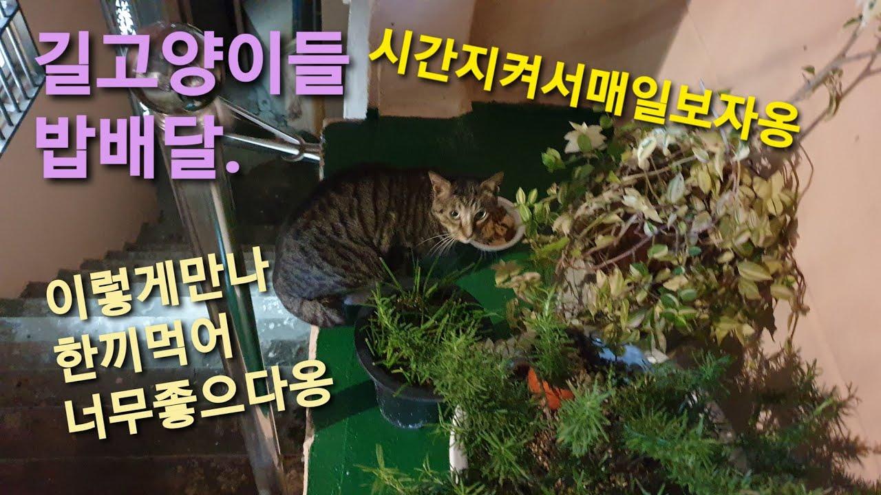 장마철 길고양이 밥배달 영상 입니다