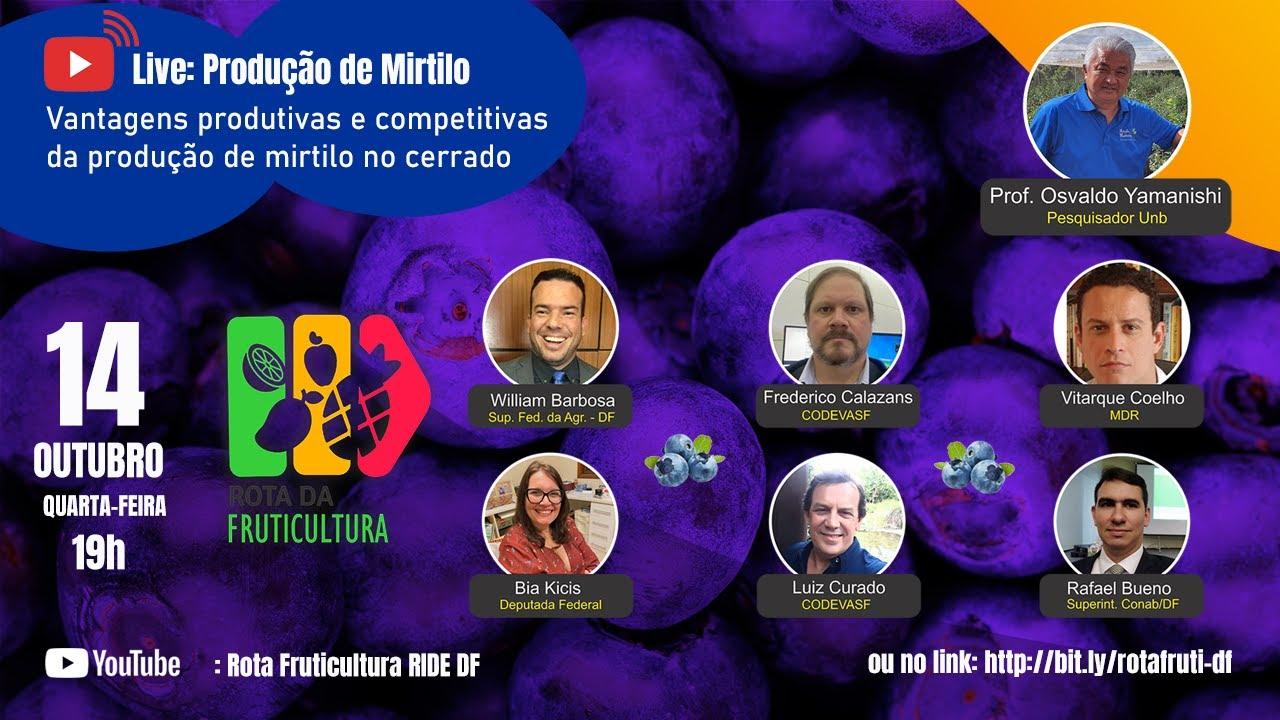 Download Live: Produção de Mirtilo com o Professor Osvaldo Yamanishi da UnB