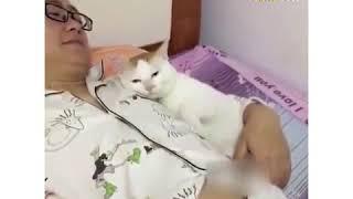 Trên đời này có 2 loại mèo   nhà người ta và nhà tui