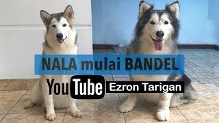 NALA BANDEL BANGET ! Ezron Tarigan & Humble Spiker