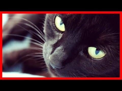 【ちょっと笑える心霊体験】幽霊が俺についてきてしまった。そいつが猫を見つけて…【邪悪な予感】