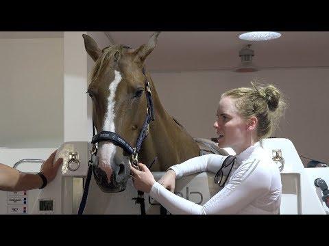 Horse Spa Day! (Dubai Equine Performance Centre)