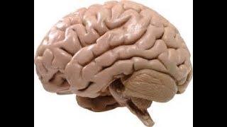 Активизируем Головной мозг. Очень простое упражнение.