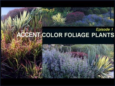 ACCENT COLOR FOLIAGE PLANTS - Episode 1 Deer Resistant Plants (DRP) Series, Coastal NE, U.S.