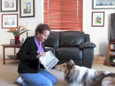 Priceless Dog Toys: Cardboard Egg Carton