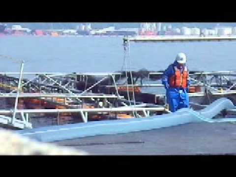 Coho Salmon Live Harvest- Silkstream Pump