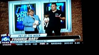 Personal Dog Training- Greg & Frankie On Fox 6 Good Day Alabama: Http://personaldogtraining.org/