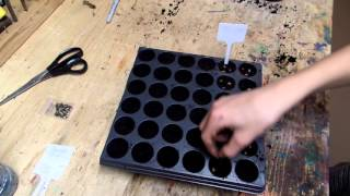 Planting Milkweed seeds