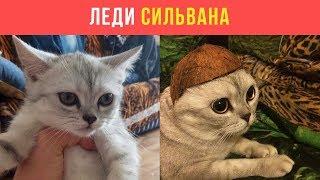 Кошка Алексея Совы | Леди Сильвана | LIVE