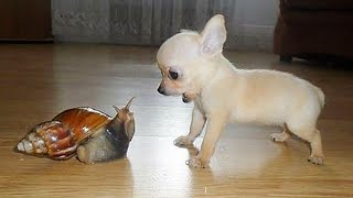 AWW CUTE BABY ANIMALS Videos Compilation Funniest and cutest moments of animals  Soo Cute kiki #10