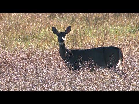 2016-17 Missouri Deer Hunting Season - Potential Regulation Changes
