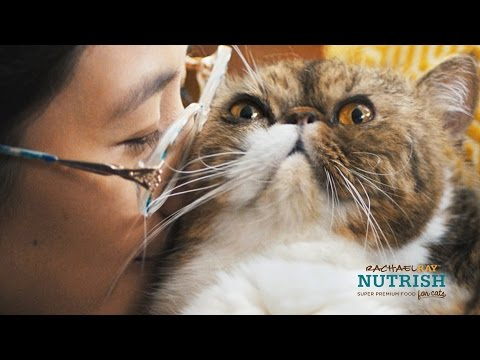 Signs You're A Cat Lady // Presented By BuzzFeed & Rachael Ray Nutrish