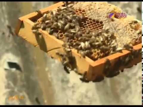 Краснополянская пчелоферма оказалась на грани банкротства