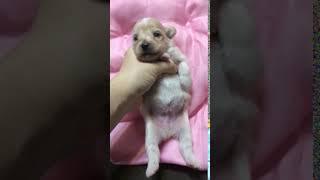 ミックス男の子 thumbnail