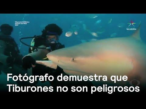 Tiburones en peligro de extinción - Denise Maerker 10 en punto -