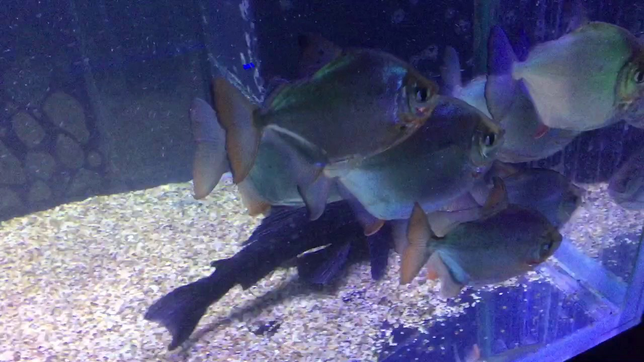 Perfect scales and fins are a sign of fish health youtube for List of fish with fins and scales