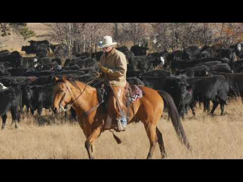 John Moore Horse & Cattle Course USA
