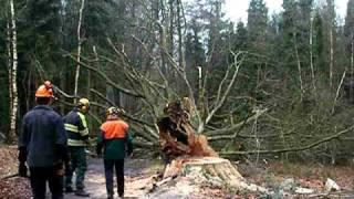 brandweer beetsterzwaag boom