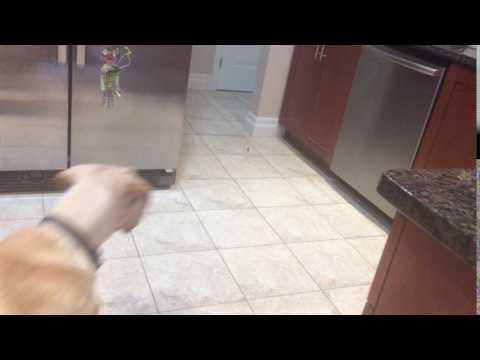 Cute dog vs its food (1)
