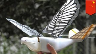 China to use 'spy birds' to boost surveillance - TomoNews