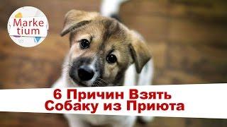 6 Причин Взять Собаку из Приюта!