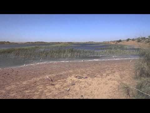 Bukhara Nurota Lake Aydar Uzbekistan 170