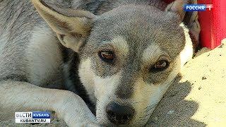 В микрорайоне Молодежном в Краснодаре массово истребляют бродячих собак