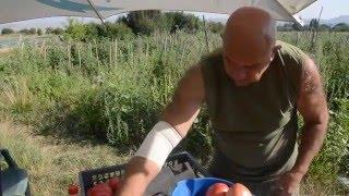 Земеделско стопанство Вантана(Стопанството на Димитър и Христина Найденови е разположено на около 25 км северозападно от София. Семейство..., 2016-05-16T09:10:47.000Z)