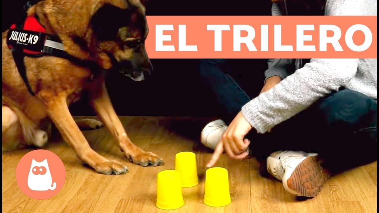 Juegos De Olfato Para Perros El Trilero Youtube
