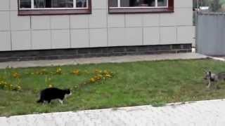 猫vs犬のおもしろケンカ動画です!ネコもイヌも超かわいいですw ※かわい...