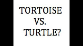 WHAT IS THE DIFFERENCE BETWEEN A TORTOISE AND A TURTLE NO VERBAL CUES