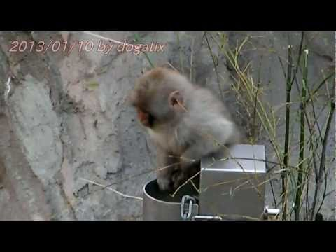 """Japan Trip 2013 Tokyo """"Ueno Zoo"""" Child of Japanese macaque 22"""