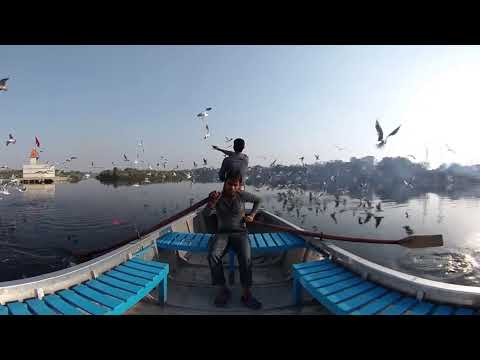 360° Of The Week: Migratory Birds In Delhi